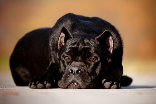 O que acontece com os cães quando os donos morrem?