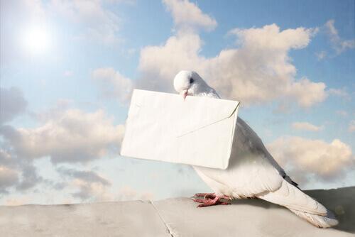 Pombos-correios: pássaros que fizeram história