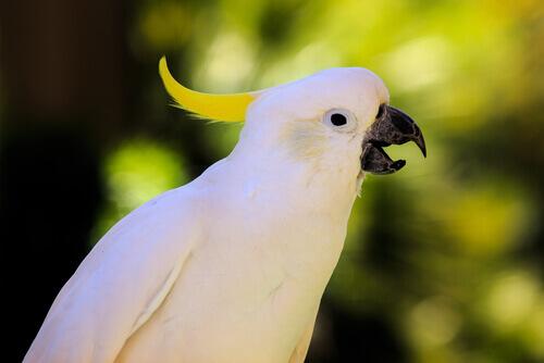 Você quer que o seu papagaio aprenda a falar?