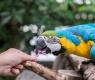 Papagaio comendo