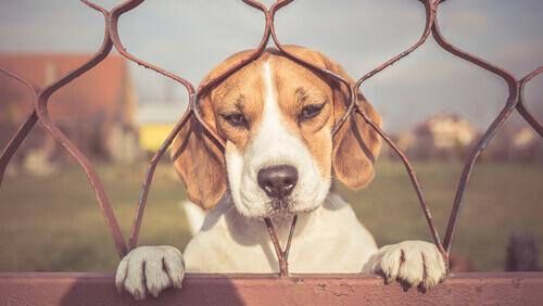 Como combater a ansiedade por separação do meu cão?