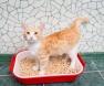 areia-gato