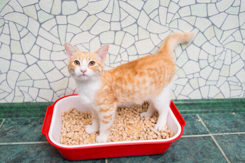 Gato usando a caixa de areia