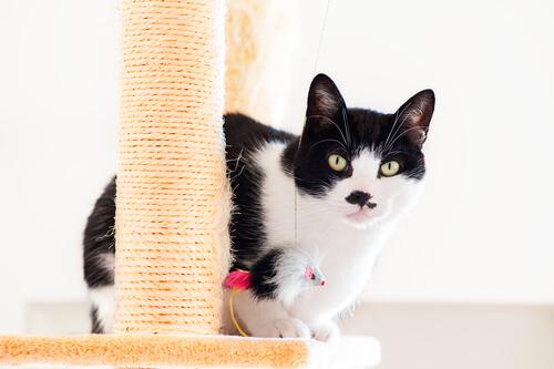 Gato brincando em arranhador