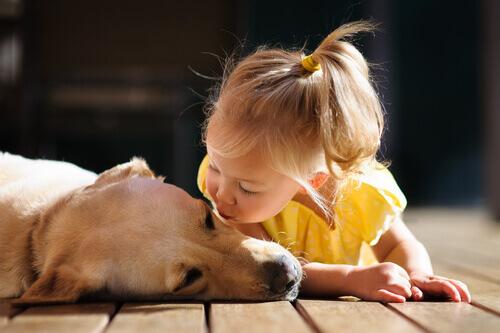 Os bebês que vivem com animais de estimação desenvolvem menos alergias