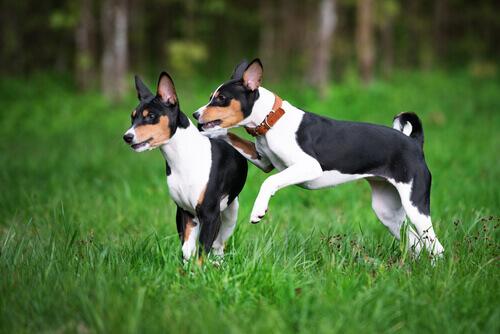 As raças de cães mais antigas do mundo