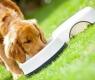 cão-comendo - Copia