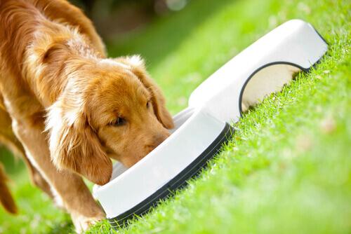Os principais problemas que afetam o tubo digestivo dos cães