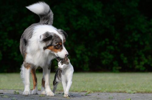 O rabo dos cães nos indica algo