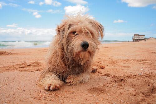 Por que os cães arranham o chão após fazerem suas necessidades?
