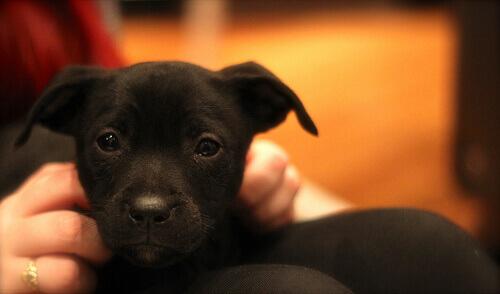4 razões para conversar com o seu cão