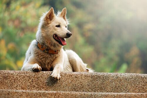 O comportamento estereotipado nos cães