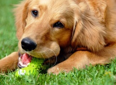 cachorro-e-brinquedo