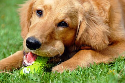 Faça você mesmo brinquedos para seu cão. Ele vai adorar!