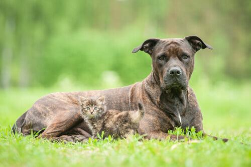 9 coisas que você deve ter em conta antes deadotar um segundo animal