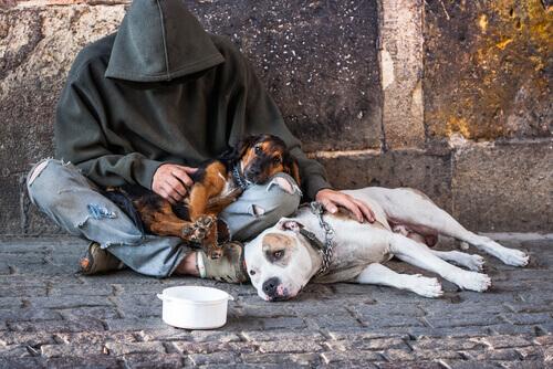 Fidelidade a prova nos piores momentos:mendigos com seus cães