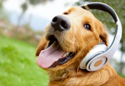 Os animais também amam a música