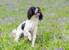 cachorro-flores