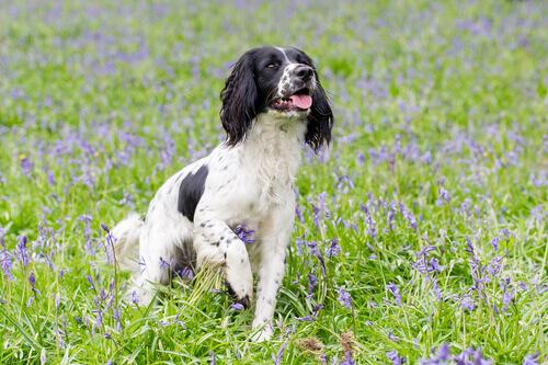A aromaterapia em cães, o que é?