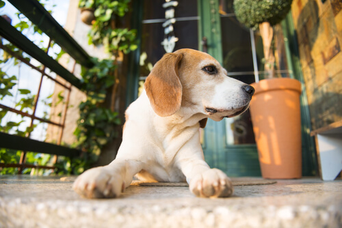 5 dicas para o cão que fica sozinho em casa ser mais feliz