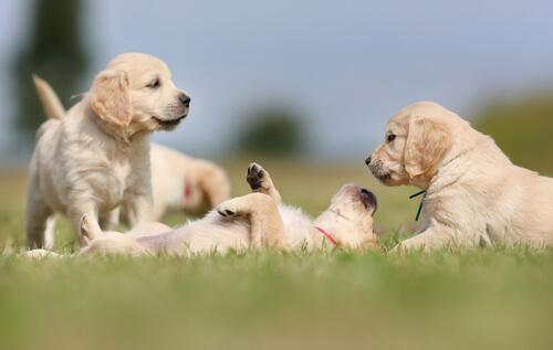 Você sabe quais os benefícios de conviver com um cachorro?