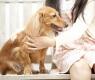 caricias-cachorro