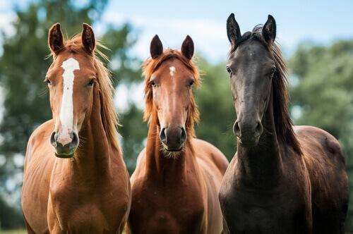 Conhecendo melhor os cavalos