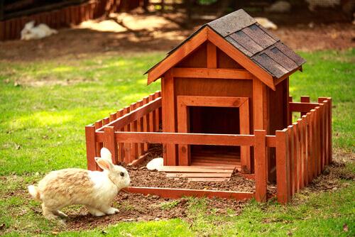 Principais aspectos da higiene do coelho