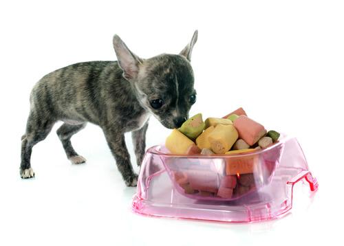 Comida para cães pequenos