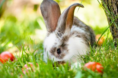 A alimentação dos coelhos