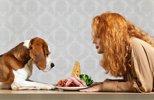 Como alimentar os cães