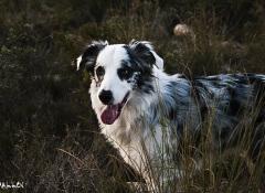 envelhecimento-cães