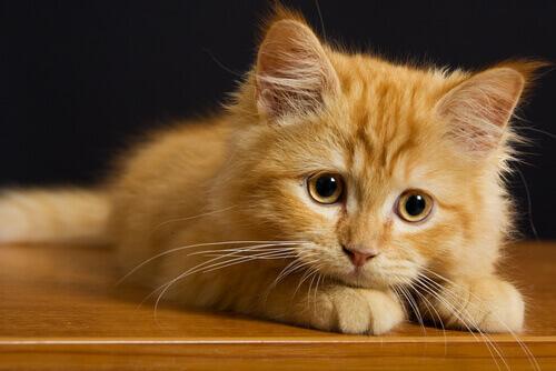 7 coisas que os gatos odeiam