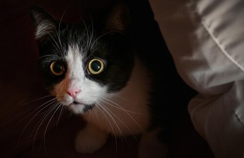 Comportamentos e conflitos em gatos: medo, fobia e ansiedade