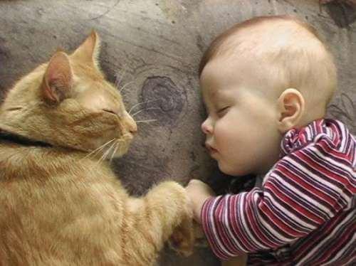 Gato e bebê dormindo