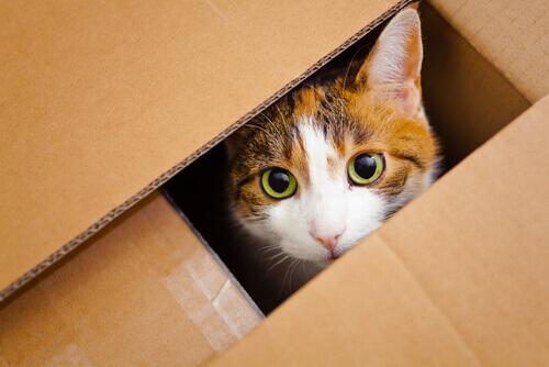 Coisas estranhas que os gatos fazem e uma possível interpretação