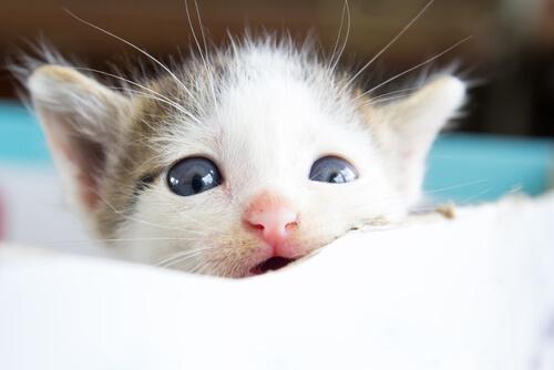 É verdade que os animais choram?