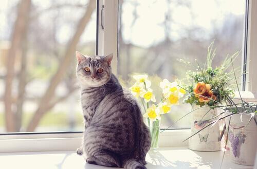 O que é a marcação de território dos gatos?