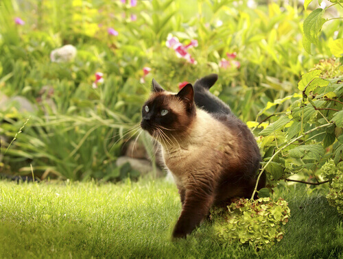 Cauda do gato curvada
