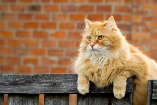 Como os gatos marcam seu território?
