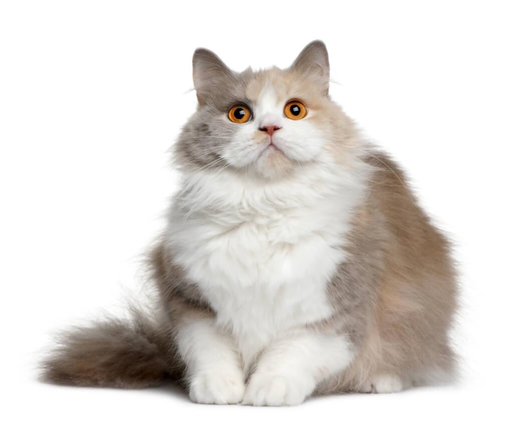 gatos e doces