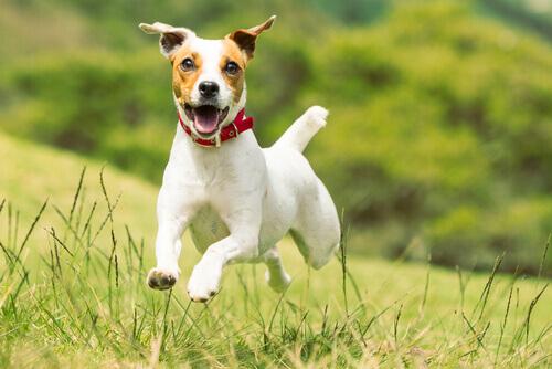 Conheça os Terriers mais populares