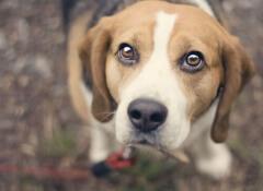 Como limpar os olhos dos cães