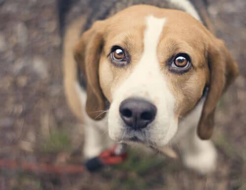 Limpar os olhos e retirar a remela nos olhos de nossos animais de estimação