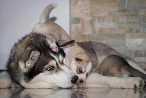 A socialização dos cachorros