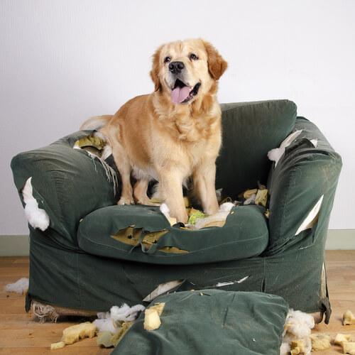 O estresse em animais: um mau comum
