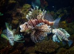peixe-exotico