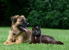personalidade-cachorro-e-gato2