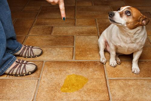 Como educar um cão
