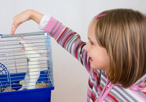 Criança brincando com ratinho